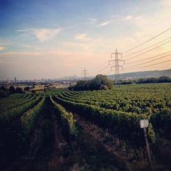 Blick auf die Weinberge und Wien in Stammersdorf