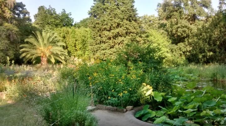 Botanischer Garten in Montpellier.jpg