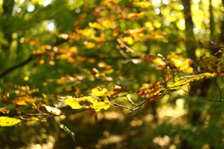 Herbst_Oktober_Vorschau_Blog