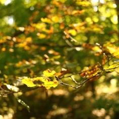 Herbstspaziergang im Schlosspark Laxenburg_Blätter