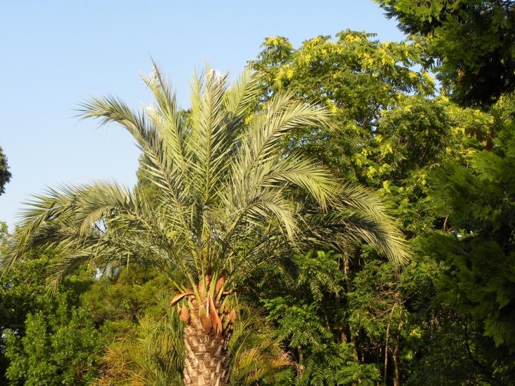 Montpellier_Le jardin des plantes