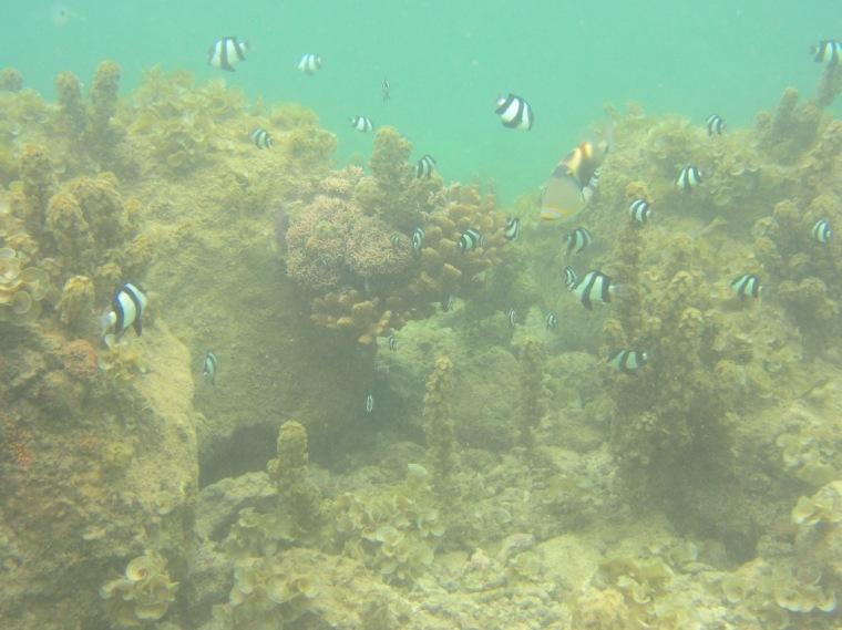 Tauch- und Schnorchelparadies Mauritius