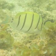 Unterwasserwelt auf Mauritius