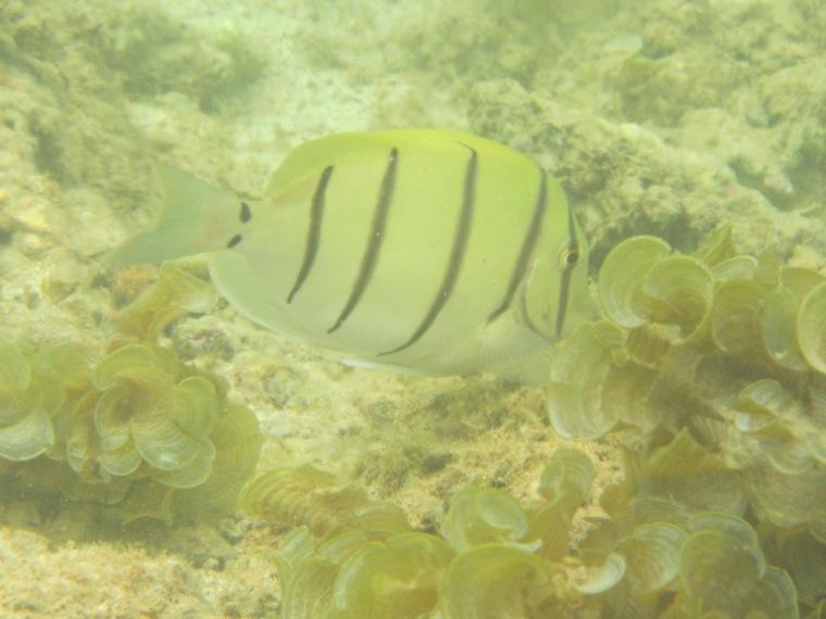 Unterwasserwelt Mauritius