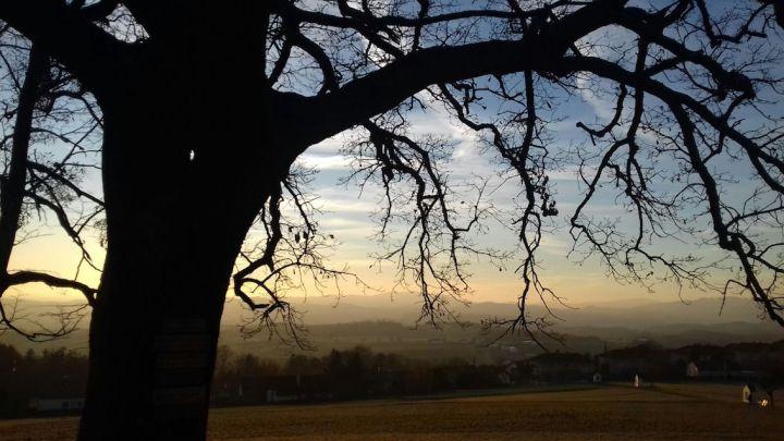 Panoramablick mit Baum_Kalvarienberg_Wartberg