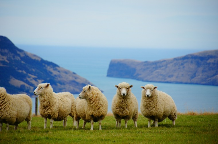 Reisetipp für 2018_Neuseeland
