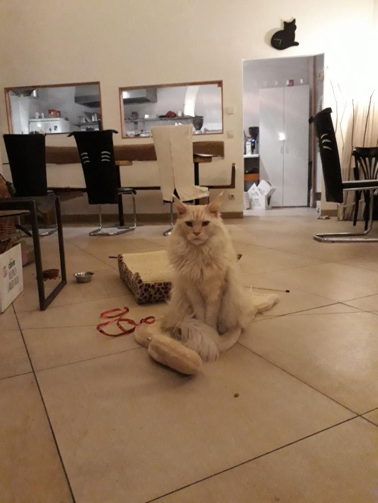Im Wiener Katzencafé Neko.jpg