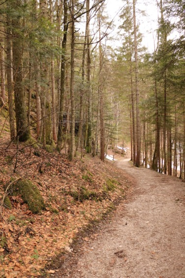 Panoramaweg Grundlsee_Wald