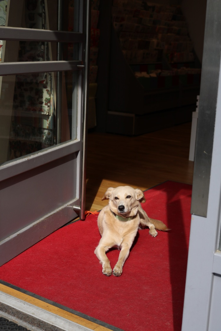 Wachhund Holly vorm Papierflieger