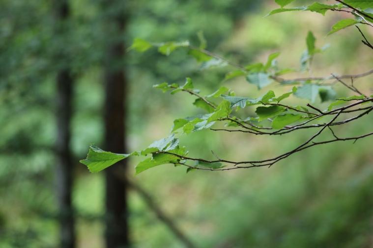 Makroaufnahme im Wald