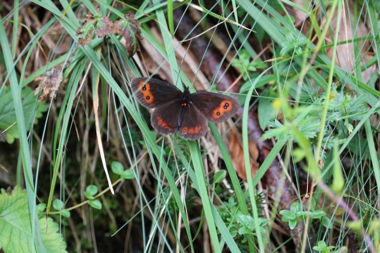 Schmetterling Makroaufnahme
