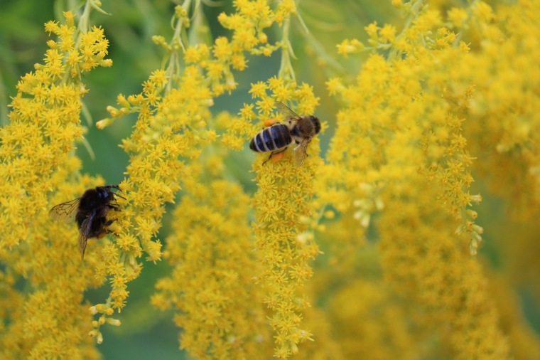 Wanderung in Obertraun Koppenwinkel Makroaufnahme Biene.jpeg