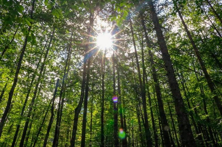 Wanderung zum Koppenwinkel Obertraun_Sonnendurchfluteter Wald