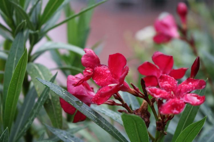 Fototour durch Wien bei Regen_Wassertropfen Nahaufnahme Blumen