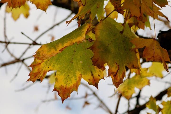 Bunte Blätter im Herbst.jpeg