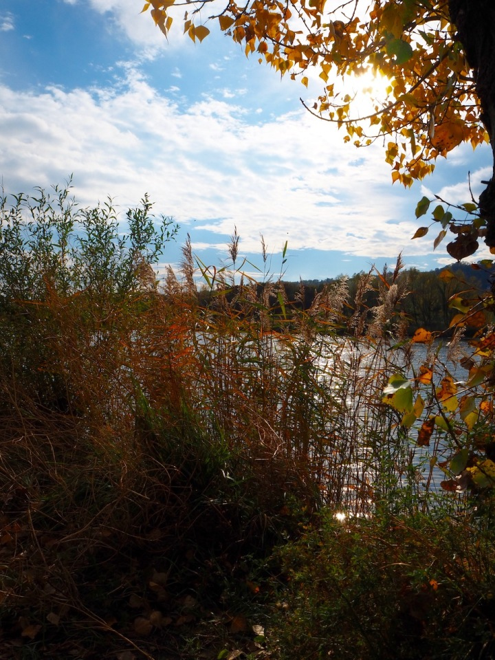 Herbstsonne Donau Wien.jpg