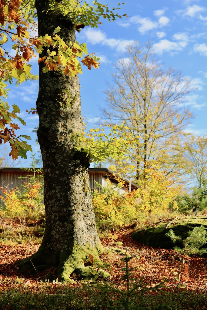 Goldener Herbst in Tragwein