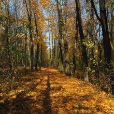 Wanderung im Naturpark Leiser Berge