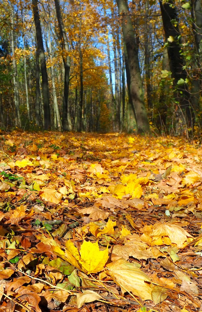 Leiser Berge_Herbstlaub.jpg