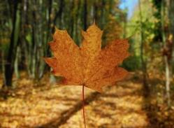 Leiser Berge Herbstwanderung
