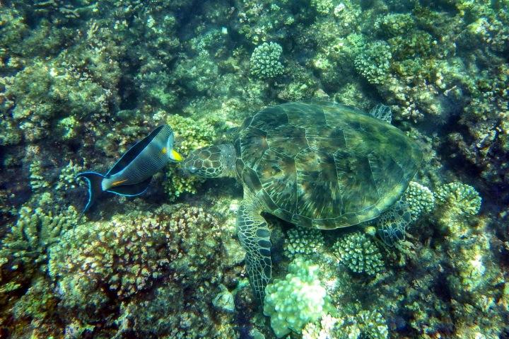 Masakt-Muscat-Schnorcheln_Daymaniyat_Islands