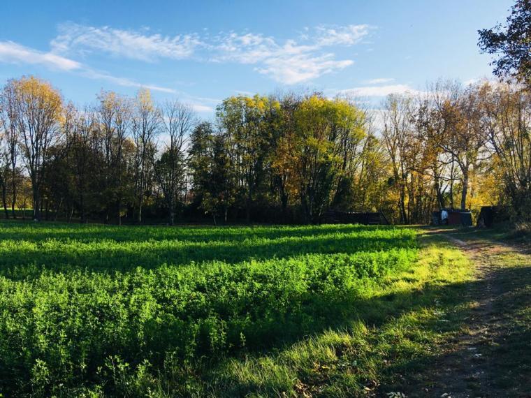 Niederleis Wanderung Heimweg_Sattes Grün