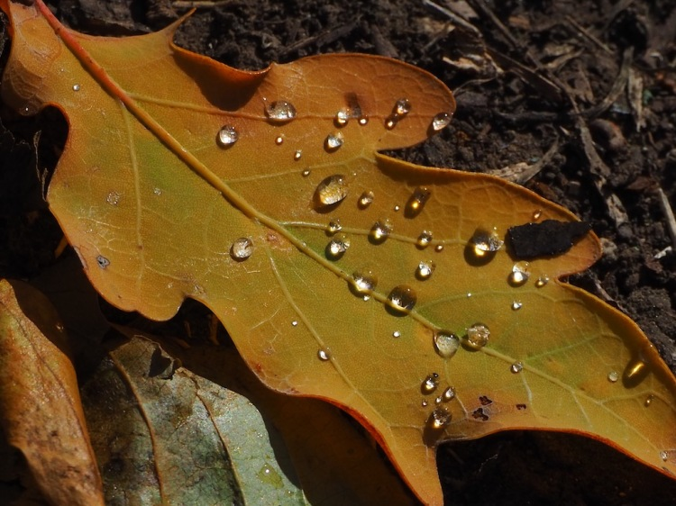 Tau auf den Blättern