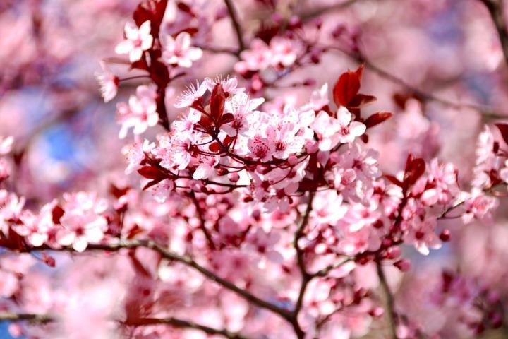 Wien im Frühling_Kirschblüten im Stadtpark_Fotolocation