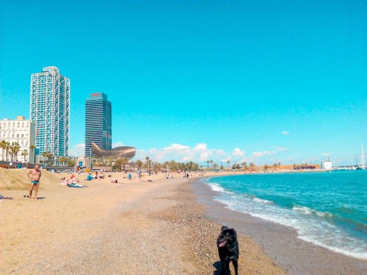 Meine Lieblingsstadt im Süden:Barcelona