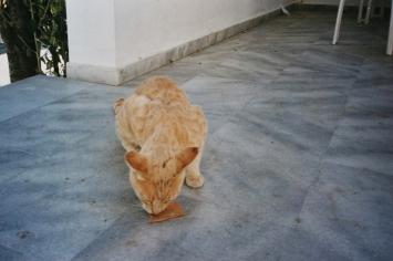Ein Herz für (hungernde) Tiere